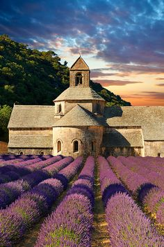 Cistercian Abbey of Notre Dame of Senanque ~ Provence