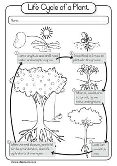 Worksheet - Plant Life Cycle
