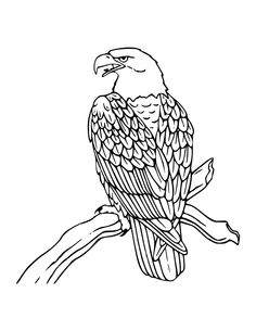 Free Eagle Coloring Pages With Printable Bald For Kids
