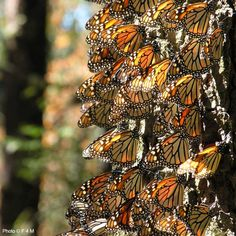 Protect the Monarch Butterfly - PLANT ONE MILLION TREES in 2015! at The Animal Rescue Site