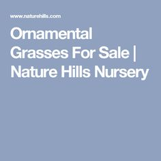 Ornamental Grasses For Sale | Nature Hills Nursery