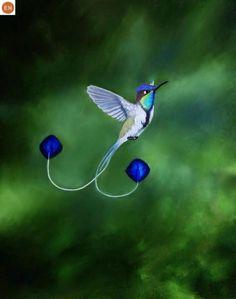 Marvelous spatuletail - loddigesia mirabilis - a Hummingbird of Peru Kinds Of Birds, All Birds, Cute Birds, Pretty Birds, Little Birds, Beautiful Birds, Animals Beautiful, Funny Birds, Angry Birds