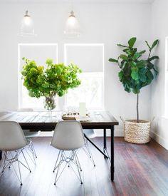 Groen wonen   De vijgenboom (vijg) in je interieur & tuin - Woonblog StijlvolStyling.com