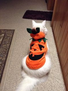My favorite Gizzy in his Halloween costume.