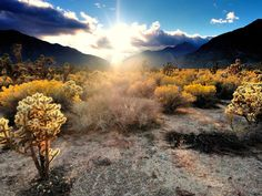 The Most Beautiful Deserts in the World   Mojave Desert   Southwest USA