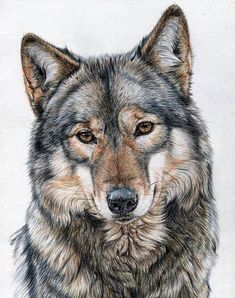 Kreuzstichmuster, Wolf Animal Nature, einzigartiges Zimmer Home Decor, Animal Paintings, Animal Drawings, Pencil Drawings, Art Drawings, Wolf Drawings, Drawing Animals, Art Sketches, Wolf Tattoos, Color Pencil Art