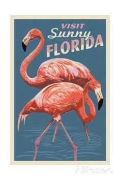 Visit Sunny Florida - Flamingo Posters by Lantern Press at AllPosters.com