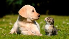 Nature Museum Pets Care - Pet Care Advice & Health Information Amor Animal, Mundo Animal, Cute Cats And Dogs, Cats And Kittens, Cute Puppies, Dogs And Puppies, Rottweiler Puppies, Weimaraner, Cat Day