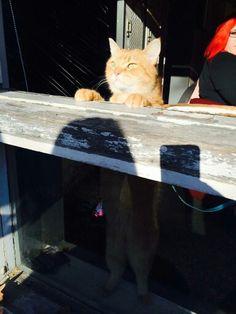 Aww Bob Animals And Pets, Funny Animals, Cute Animals, A Cat Named Bob, Street Cat Bob, Bob Cat, Love To Meet, Creature Comforts, Cat Names