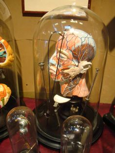 2011 London Design Festival: antique style glass domes #howcurious