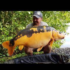 Anyone who says they don't want to catch this fish is lying Bass Fishing Shirts, Fishing Uk, Fishing Shop, Fishing Videos, Walleye Fishing, Fishing Girls, Carp Fishing, Fishing Boats, Cool Fish