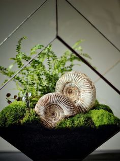 Make your own terrarium. by Ken Marten, via Flickr