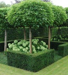 This is Fascinating Evergreen Pleached Trees for Outdoor Landscaping 26 image, y. This is Fascinating Evergreen Pleached Trees for Outdoor Landscaping 26 image, you can read and see Back Gardens, Small Gardens, Formal Gardens, Outdoor Gardens, Outdoor Trees, Courtyard Gardens, Outdoor Decor, Formal Garden Design, Herb Garden Design