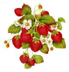 ru / Photo # 4 – 1 – A-legria - Obst Strawberry Art, Strawberry Pictures, Strawberry Kitchen, Fruit Illustration, Botanical Illustration, Garden Labels, Fruit Art, China Painting, Fabric Painting