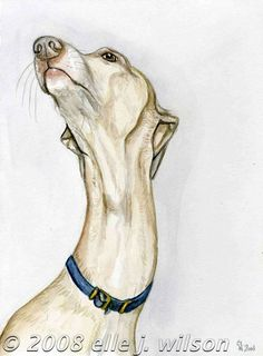 Such a sweet feeling  Italian Greyhound Art Dog by AlmostAnAngel66, £15.00
