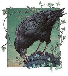 Crow by Alan Baker  What a beautiful artwork! I love the vines of Ivy with the highlighted feathers!