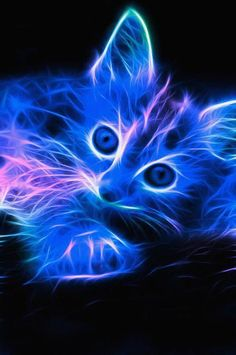 * Electric Cat - kitten, digital art, flames, blue