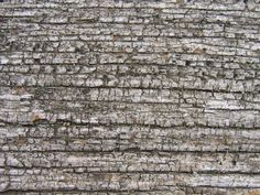 20 (FREE) BEAUTIFUL HI-RES WOOD TEXTURE WALLPAPER BACKGROUNDS - 09 Weathered…