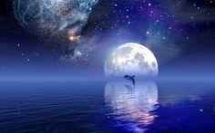 Dolphin Jumping at Night Wallpaper