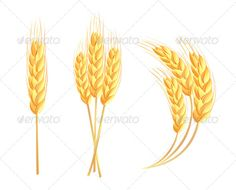 Wheat Ear  #GraphicRiver         Wheat ear     Created: 25May13 GraphicsFilesIncluded: JPGImage #VectorEPS Layered: No MinimumAdobeCSVersion: CS Tags: agriculture #autumn #bio #bread #cereal #corn #ear #eco #farm #flour #food #fresh #grain #growth #harvest #hayisolated #mature #nature #nutrition #organic #peasant #plant #ripe #rye #seed #spike #stem #wheat #whole #yield