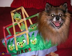 Angry Bird Dog Costume - 2012 Halloween Costume Contest