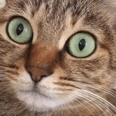 Cat hiccups
