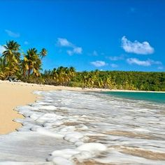 """Vieques is heaven on earth"". Read more about our beautiful & vibrant island."