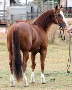 cutting horses | Lethal Lena (IMP)
