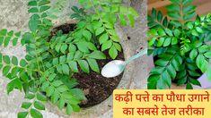 Gutter Garden, Herb Garden, Vegetable Garden, Gardening Tips, Planters, Herbs, Activities, Vegetables, Youtube
