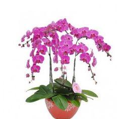 Орхидея Фаленопсис Мини Plants, Flora, Plant, Planting