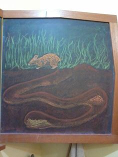 4º ano - Zoologia