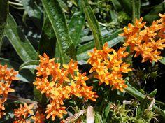 More Tinicum blooms