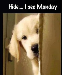 Funny monday quote with cute dog puppy... For more funnies and hilarious joke pics visit www.bestfunnyjokes4u.com/