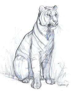 Marvelous Drawing Animals In The Zoo Ideas. Inconceivable Drawing Animals In The Zoo Ideas. Animal Sketches, Animal Drawings, Art Sketches, Anatomy Sketches, Big Cats Art, Cat Art, Desenho Tattoo, Cat Drawing, Cat Sketch