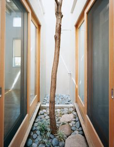 A Robinia tree moved from another part of the site grows in this pocket courtyard and thermal chimney in the heart of the house.  Photo by: Tom Fowlks