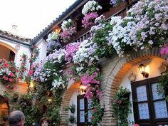 Flores en el balcón - Plantas suspendidas con sus macetas, apoyadas en la superficie de nuestras ventanas o en las repisas de las mismas.