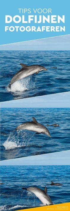 Fotografie tips voor dolfijnen fotograferen (en walvissen). Gebruik deze reisfotografie tips als je bijvoorbeeld langs de boot springende dolfijnen hebt. Deze foto's zijn gemaakt bij Madeira, een eiland dat bij Portugal hoort maar voor de Marokkaanse kust licht.
