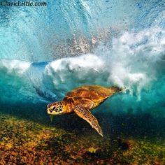 #shorebreak #surf #seaturtle #clarklittle