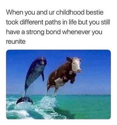 Hey, if you like premium funny ass memes, then this is the place for you! Check out these original Cool Strange funny ass memes. Funny Animal Memes, Cute Funny Animals, Funny Cute, The Funny, Animal Quotes, Daily Funny, Funny Friend Memes, Funny Relatable Memes, Funny Posts