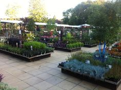 Garden Center Displays, Garden Centre, Garden Nursery, Plant Nursery, Indoor Garden, Garden Plants, Flower Nursery, Greenhouse Gardening, Garden Bridge