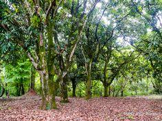 UPIS_FOTO_042016_ATIVIDADE 03_SERRADO BRASILEIRO 3