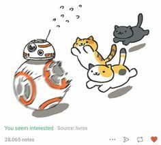 RUN BB-8!