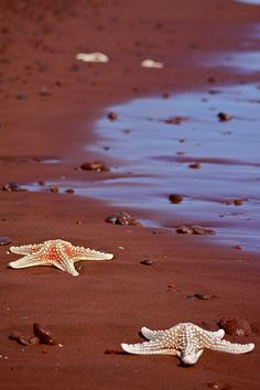Sand on this #Galapagos island was so red, it almost seemed fake!   Ecuador#FriFotos flic.kr/p/brrfZV