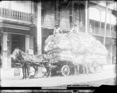 """Two men sit atop a horse-drawn carriage loaded high with cotton bales. In the background is a sign that reads """"SALOON"""" on a building with wrought iron balconies in New Orleans. Two men stand in front of the cart. Loyola University New Orleans, Louisiana State University, Louisiana History, Louisiana Tech, Oral History, Teaching History, Iron Balcony, Types Of Resources, Horse Drawn"""