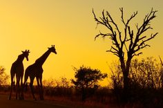 Kruger National Park- South Africa   I've been here & going again in 2012!