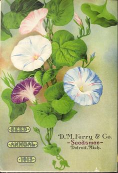 heaveninawildflower:  Seed Annual (1913). D.M. Ferry & Co. Seedsmen Detroit, Mich. https://archive.org/stream/seedannual19131913dmfe#page/n1/mode/2up