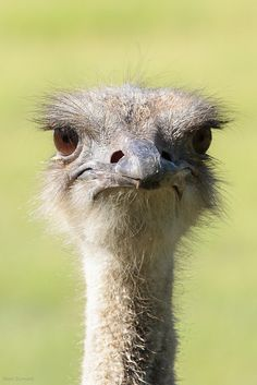 what's up (I love the expression on this ostrich's face!)