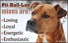 Key Traits That Define the Personality of a Pit Bull-Lab Mix