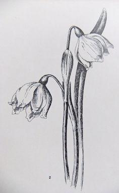 Set of 3 Vintage prints of flowers - Botanical Illustrations - Flower…