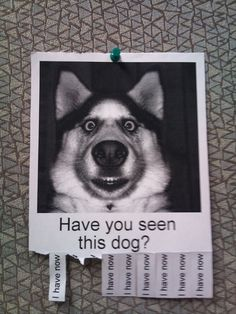 """""""Have you seen this dog? 
